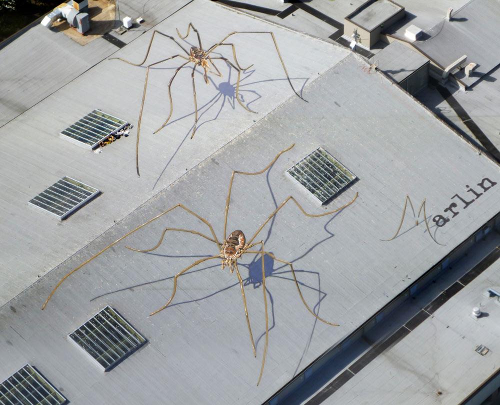 Arachnids Overshadow Seattle